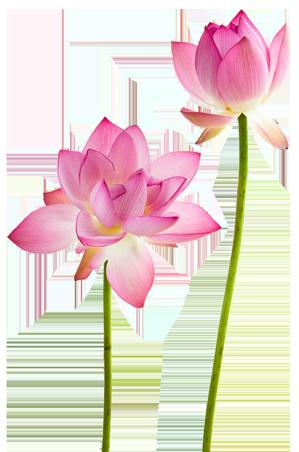 two-lotus